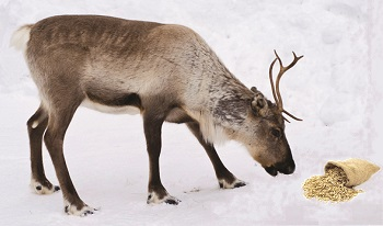Work Energy Theorem and Reindeer